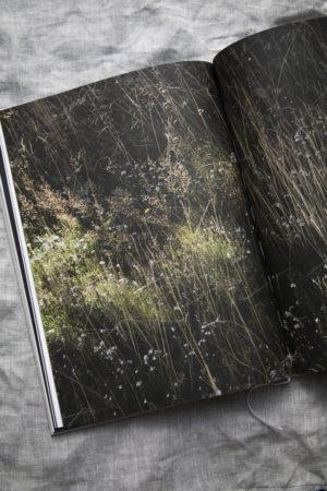 Dorfstetter Buch 8