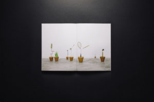 Herbarium 017