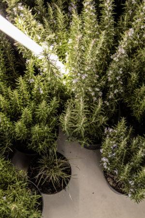 Oefferl Pop Up Mariahilferstrasse Plants Detail