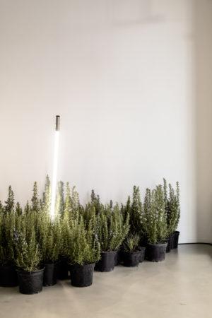 Oefferl Pop Up Mariahilferstrasse Plants Light