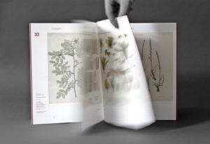 Riebenbauer Design_Wissenschaftliches Kabinett_Naturselbstdrucke_04